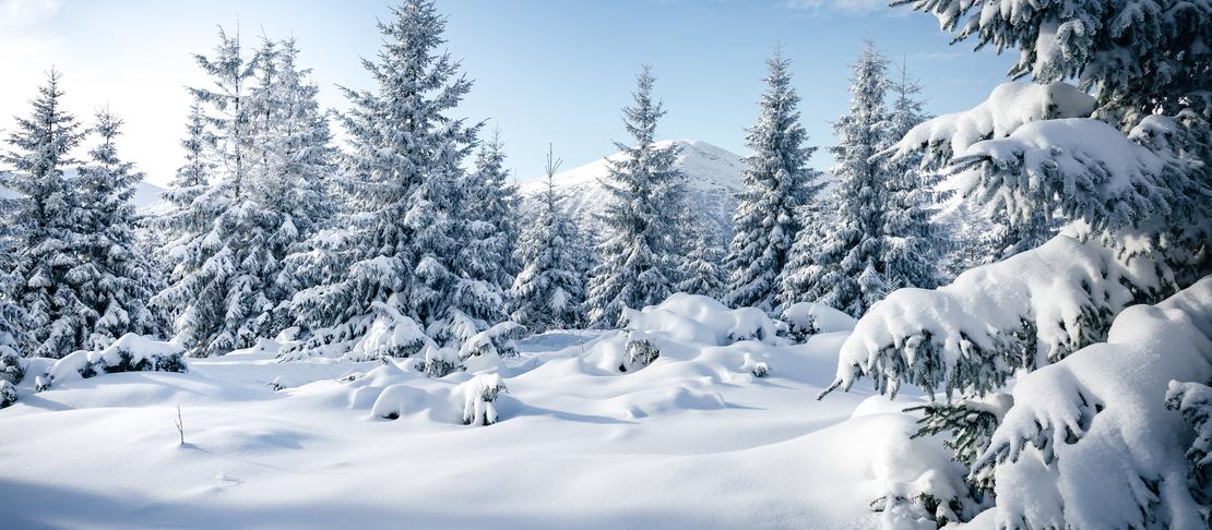 La palette dell'Inverno per l'armocromia